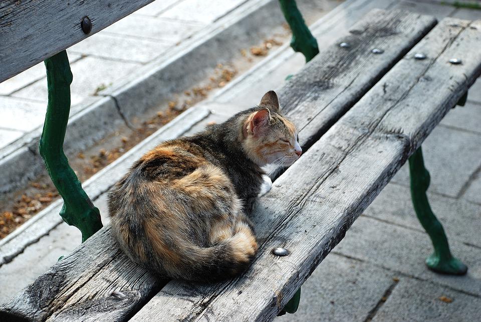 Kat på bænk