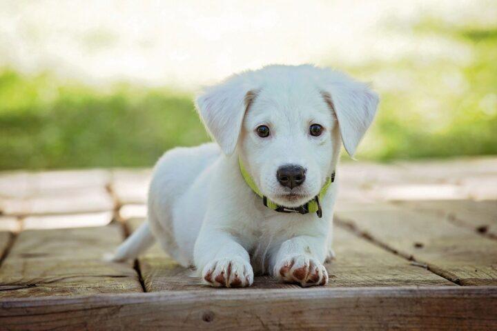 Gode tips: Nyd hverdagen med en velopdragent hund