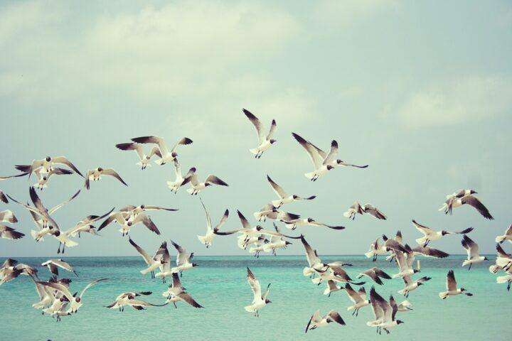 Du kan godt gå på fugleagt i storbyen