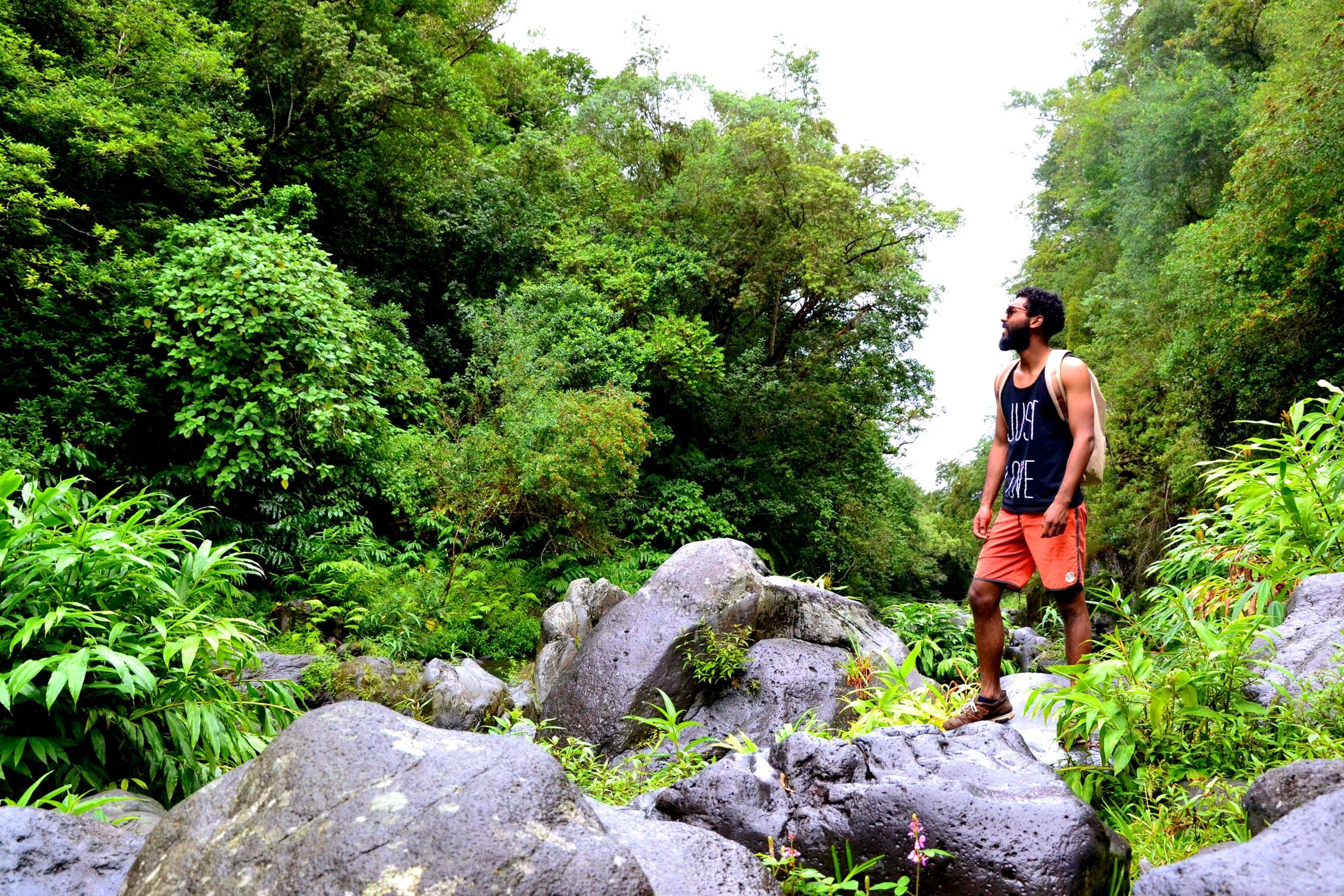 Mand står og kigger på træer