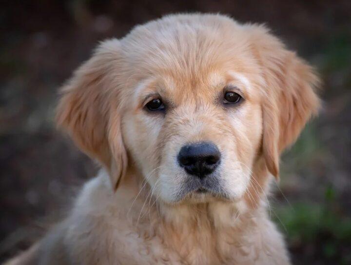 Hundefoder af god kvalitet